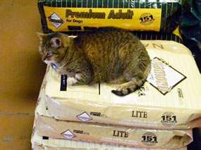 Dirty Dog Depot Store Cat